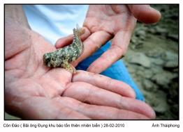 Côn Đảo, bãi Ông Đụng khu bảo tồn thiên nhiên biển