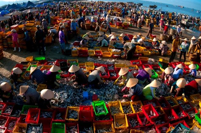 Chợ Cá Long Hải - Ảnh triển lãm liên hoan ảnh khu vực Đông Nam Bộ 2015