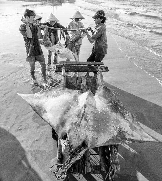 Quà từ biển - Liên hoan ảnh nghệ thuật ĐNB 2016